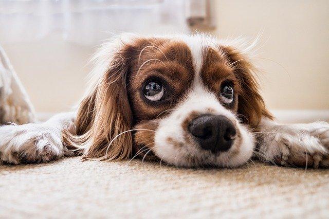 Hunde-OP-Versicherung - Was ist wichtig
