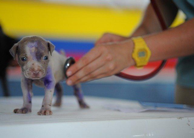 GOT-Satz Gebührenordnung für Tierärzte