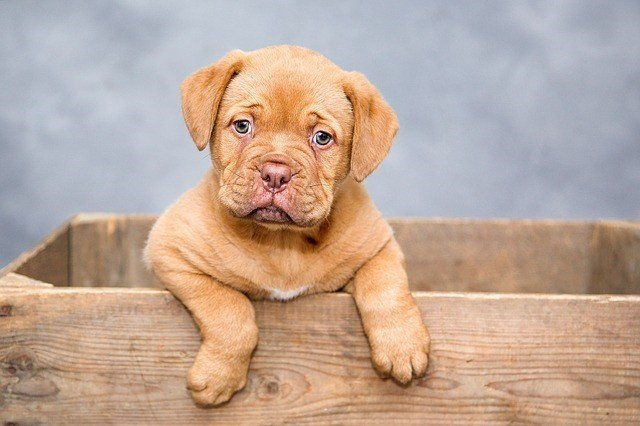 Hunde-OP-Versicherung - Was gibt es zu beachten?